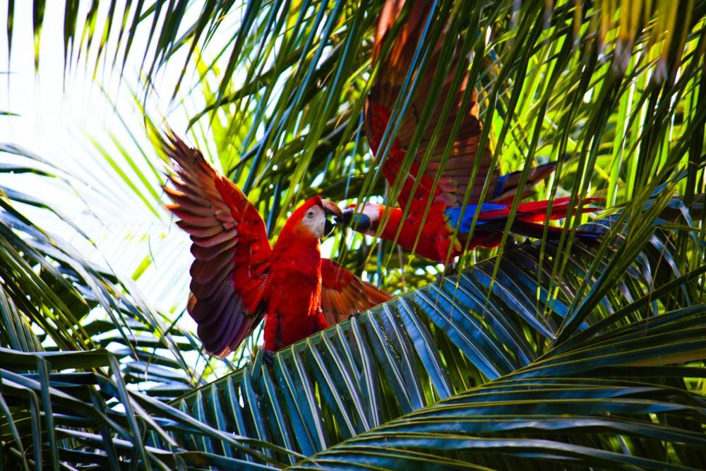 Dżungla, drzewa tropikalne, rośliny tropikalne, papugi egzotyczne