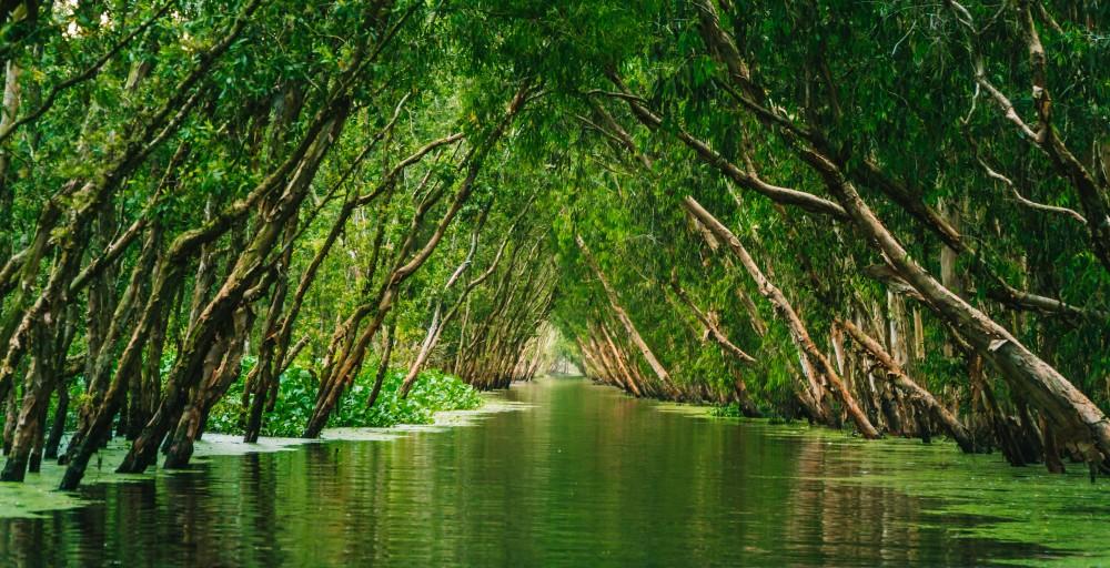Rzeka tropikalna, Dżungla, drzewa tropikalne, rośliny tropikalne