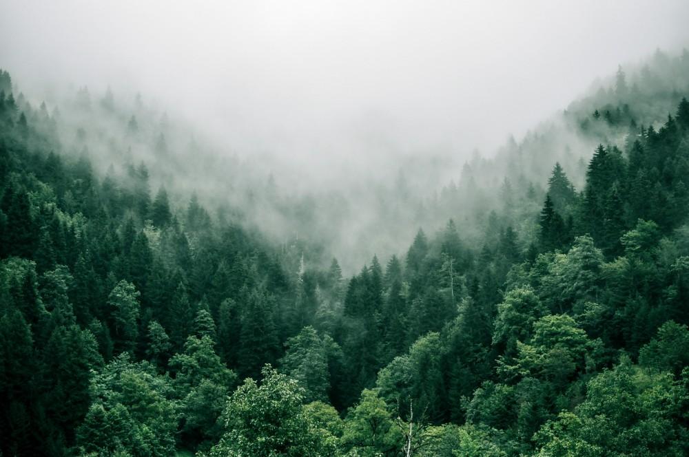 Drzewa, las, mgła, wzgórze