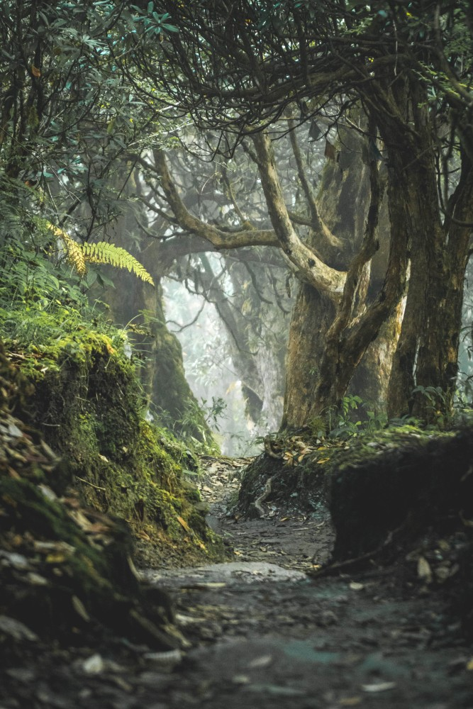 Dżungla, drzewa tropikalne, rośliny tropikalne