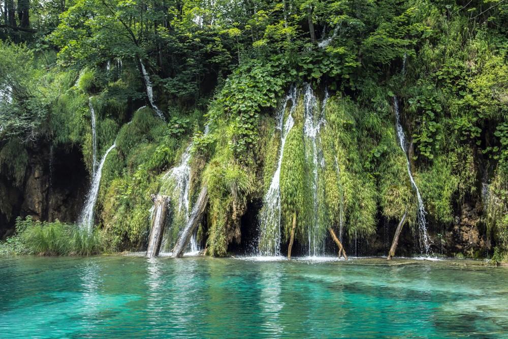 Dżungla, woda, tropikalne jezioro