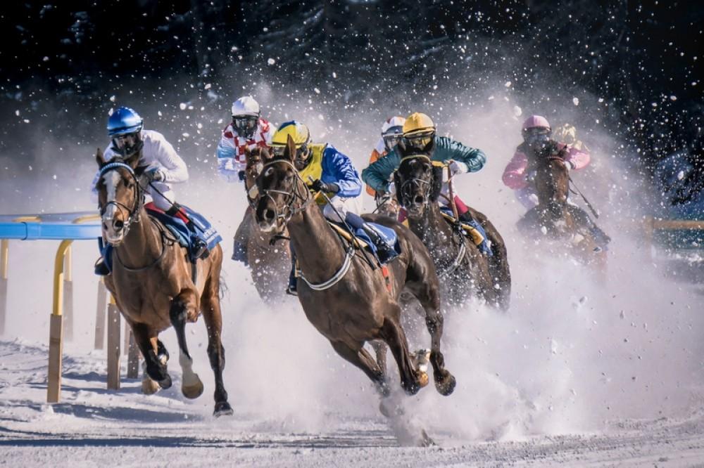 sank mortiz, konie, jeździectwo